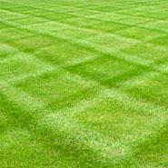 lawn_garden_scotts
